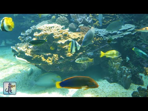 ★❤★ BEAUTIFUL CORAL REEF AQUARIUM・MARINE OCEAN FISH TANK・BEST RELAX MUSIC・1080P HD ★❤★