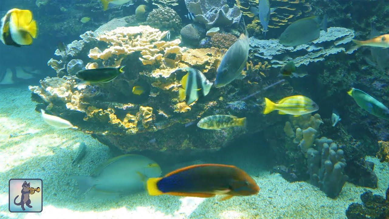 BEAUTIFUL CORAL REEF AQUARIUM・MARINE OCEAN FISH TANK・BEST ...