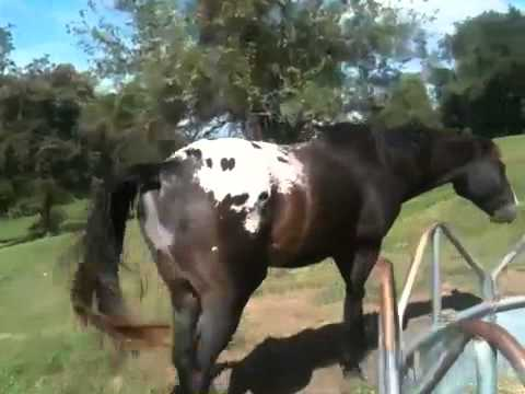 image of horse mating