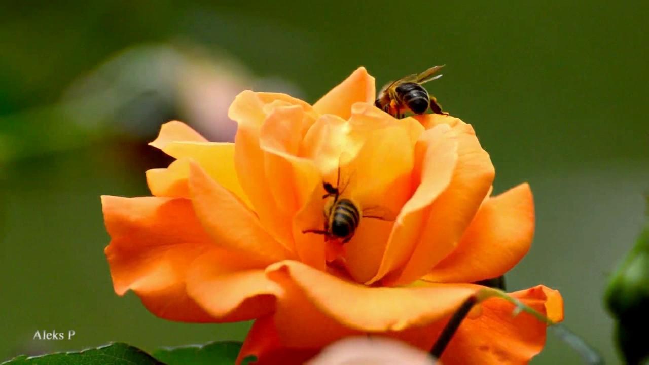 яндекс цветы картинки