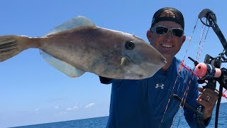 Bowfishing for UNICORN Filefish {Catch Clean Cook} Deep Sea fishing