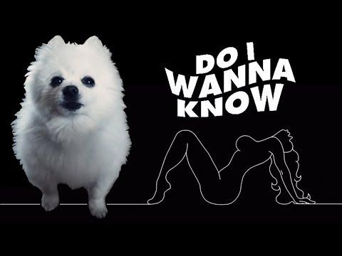 Arctic Monkeys - 'Do I wanna know' em cachorrês (ORIGINAL)