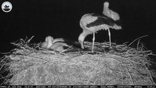 Preview of stream Stork nest in Hedeper, Germany