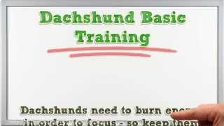 Tips on How to Do Dachshund Training