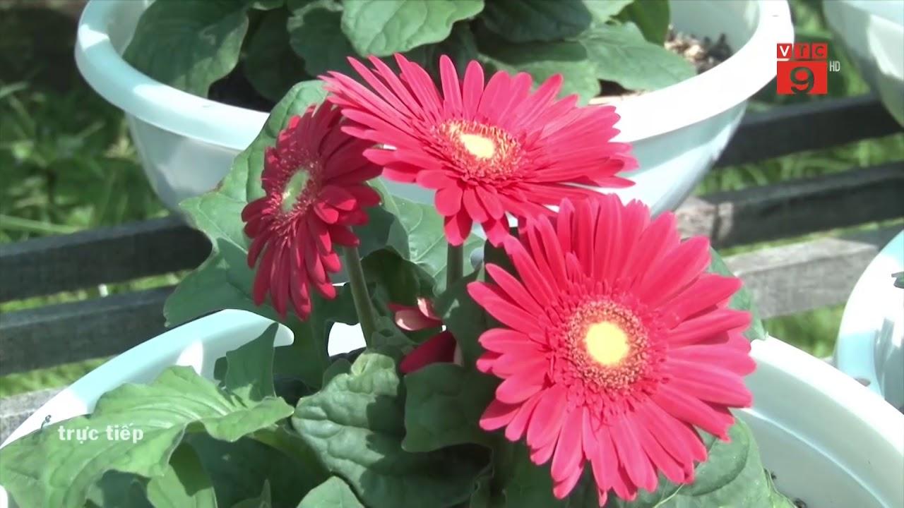 Kết quả hình ảnh cho hoa cúc đồng tiền