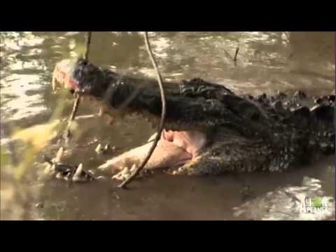 Holy Moly! Gatorzilla LIVES! | Gator Boys