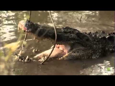 An Unwelcome, 10 Foot Long Pool Guest | Gator Boys