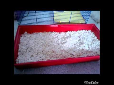 Wie macht man am besten sein Hamster Stall sauber - YouTube