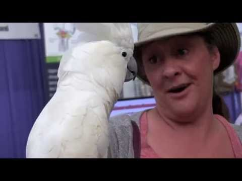 Parrot Talk TV Episode 5:  Hawaii Pet Expo 2016