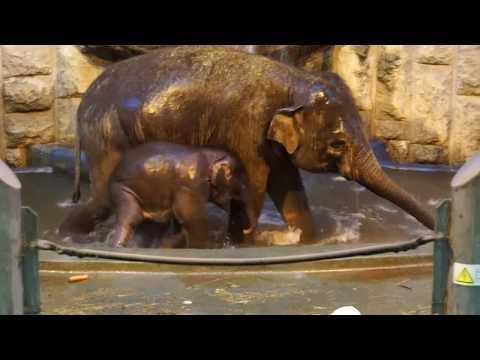 Вопрос: Где труднее ухаживать за слоном в зоопарке или на ферме?