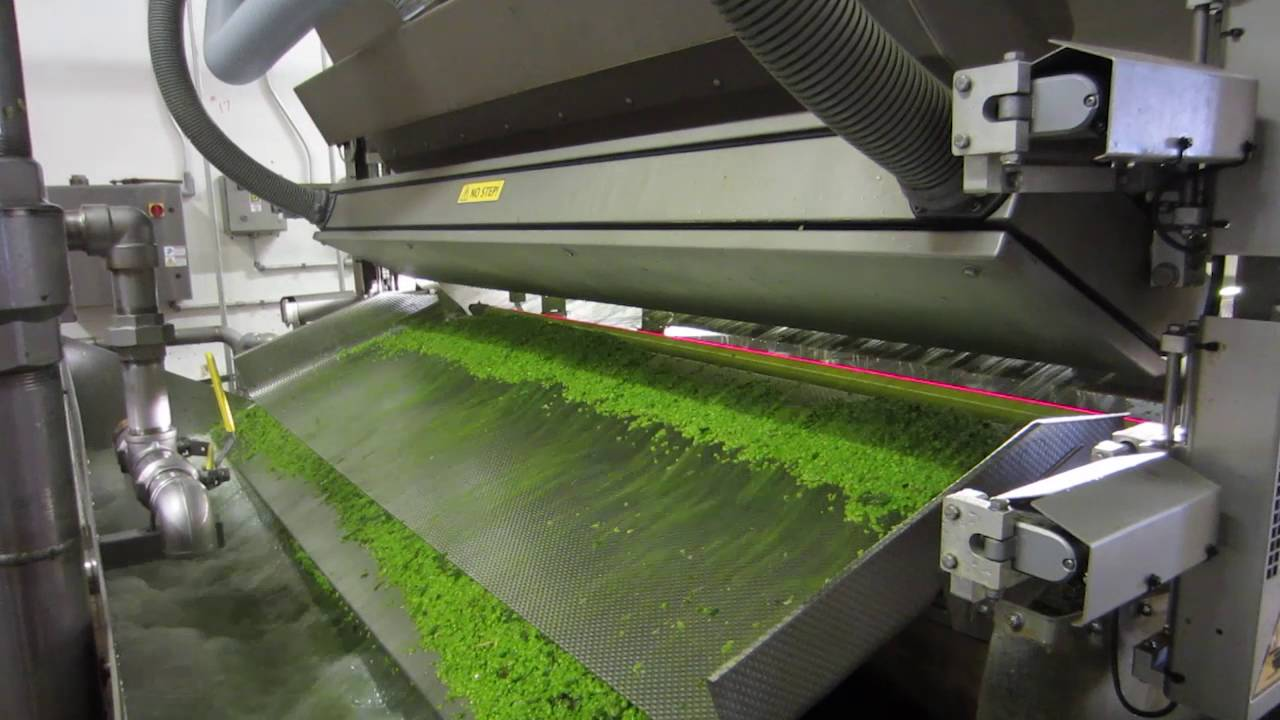 Pea sorting machine Genius - TOMRA Sorting