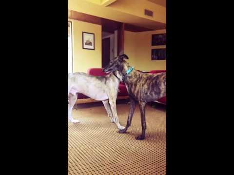 Django and Isco make music video