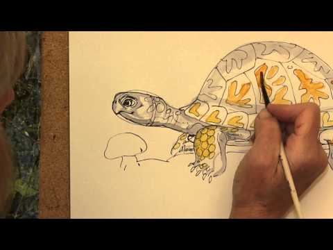 How To Draw Mossy An Eastern Box Turtle