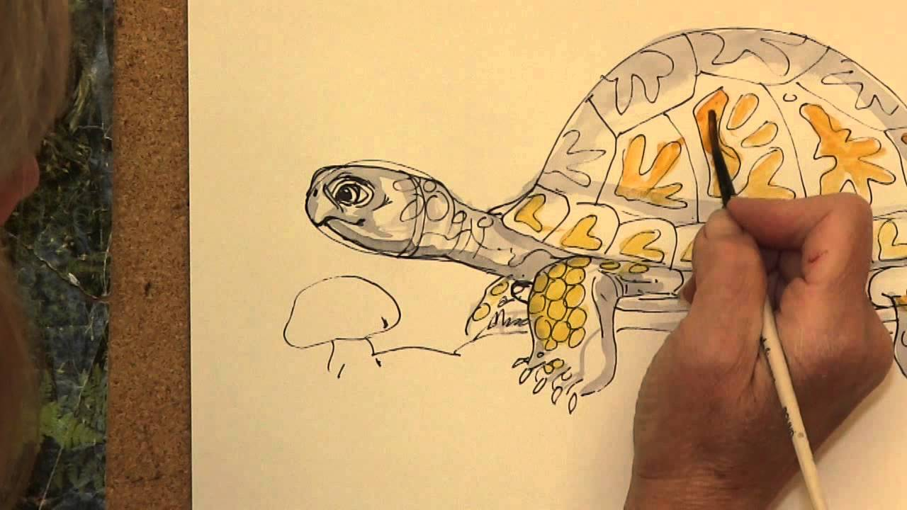 how to draw mossy an eastern box turtle youtube