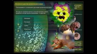 Презентация Многообразие живых организмов