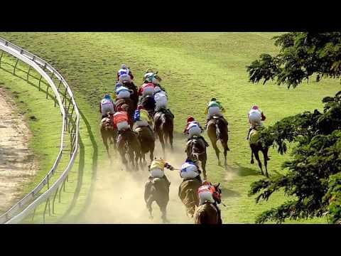 ม้าแข่งสนามฝรั่ง 12 ก.พ. 2560 เที่ยว7 ชั้น 4 ระยะ1,300 เมตร