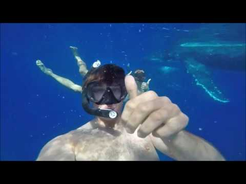 Tonga Holiday - swimming with Whales