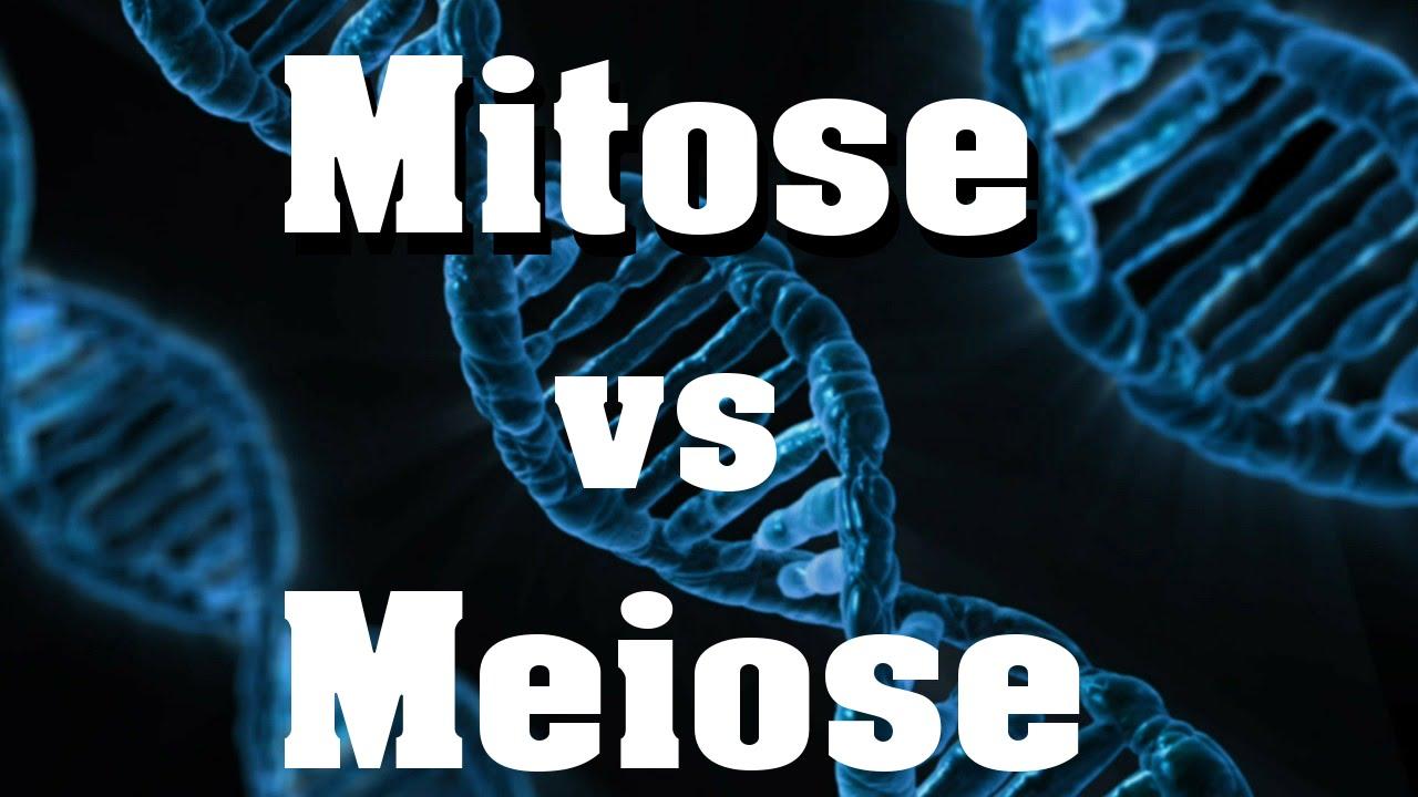 Mitose vs Meiose - der schnelle Vergleich - YouTube