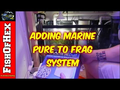 Adding Marine Pure To Frag System