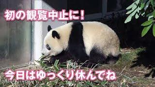 2018/12/18 落ちつきないシャンシャン 観覧中止の原因は? thumbnail
