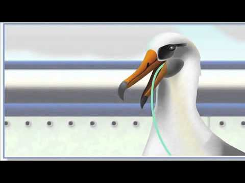ISSF Guidebooks - Seabirds