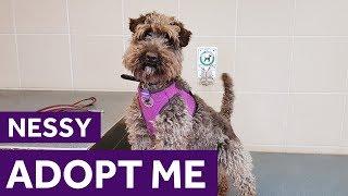 Adopt Nessy | Dogs | Mayhew