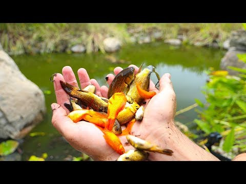 Thumbnail: Rescuing Hundreds of Fish From Dried Up Pond!! (Rescue Mission)