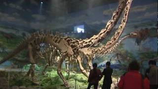Dinosauriermuseum Zigong, Sichuan - China Travel Channel