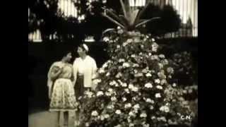 Jardin des plantes d'Avranches en 1951