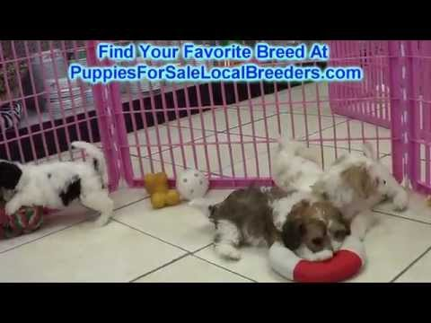 Register Your Dog With, Breeders Kennel Club, BreedersKennelClub, BreedersKennelClub.com, BKC