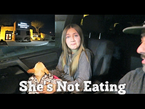 SICK DOG NOT EATING  WHAT'S WRONG WITH HER?   PHILLIPS FamBam Vlogs