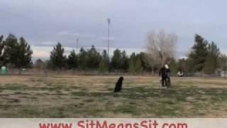 Dog Training Collars Reviews