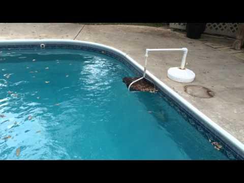 Swimming Pool Leaf Catcher Skimmer Basket Assistant