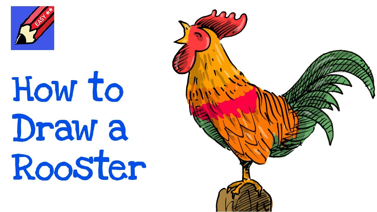 how to draw a rooster crowing real easy for chinese new year youtube