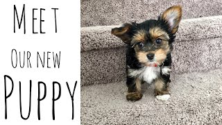 Meet our new Puppy | Yorkie Terrier