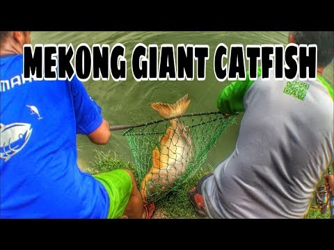 Fishing for Giant Mekong Catfish and a RARE fish got foul hooked! [VLOG #3]