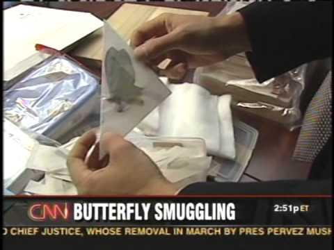 Butterfly Smuggler