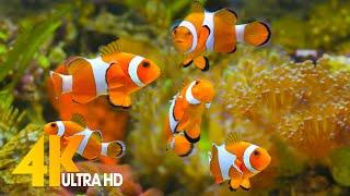 Aquarium 4K VIDEO (ULTRA HD) 🐠 Sea Animals With Relaxing Music - Rare & Colorful Sea Life Video screenshot 4