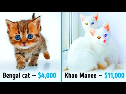 19 Awesome Cats That Cost a Fortune