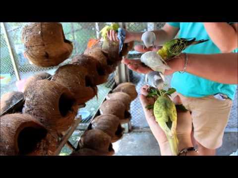 VLOG(12.01)Детский сад/Paradise Park Farm(Ko Samui,Thailand)❤Людмила Микитюк