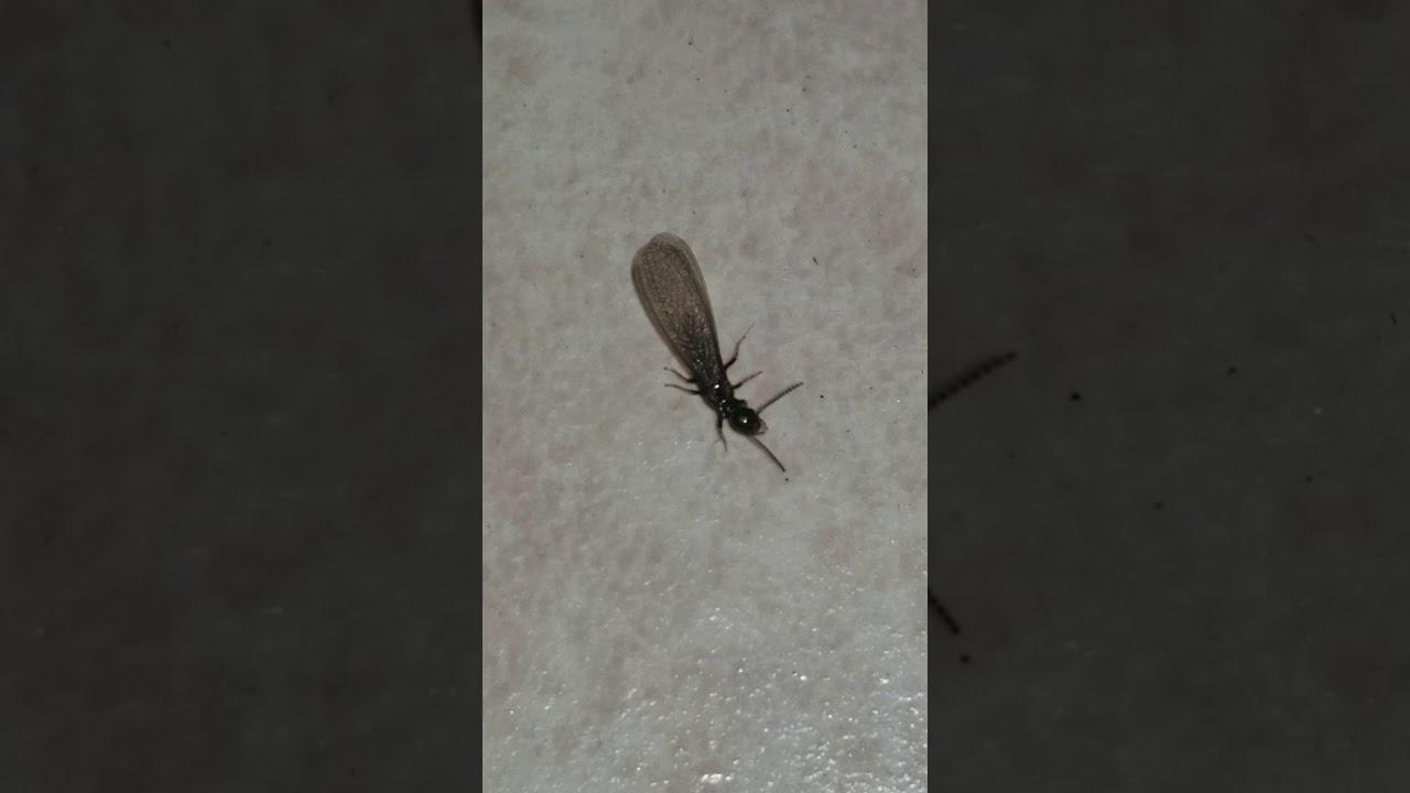 Massive termite swarm