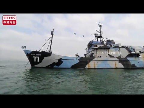 Sea Shepherd's flagship makes Hong Kong port call
