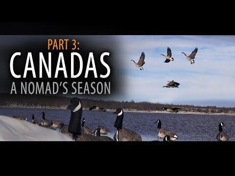 Canadas: Part 3 | A Nomad's Season - Sand Bar River Hunting Geese