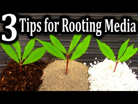 The BEST Medium for Rooting your Cuttings | 3 Criteria for Successful Plant Propagation