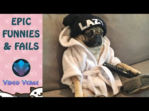 Epic Funnies & Fails #1 ✖️ Animal Nature