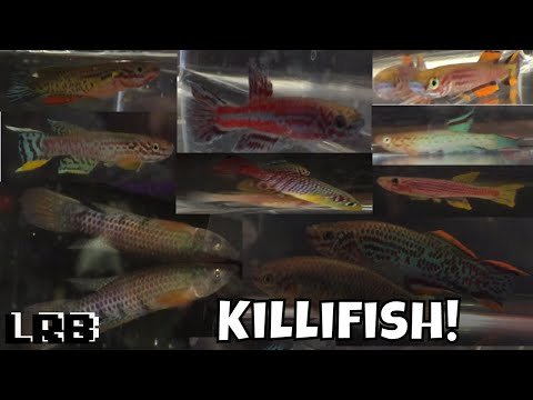 Killifish Karnival Hosted By Michiana Aquarium Society MAS Lots Of Different Rare Fish Types