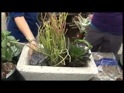 Creative Indoor Container Ideas with Succulents June 2011