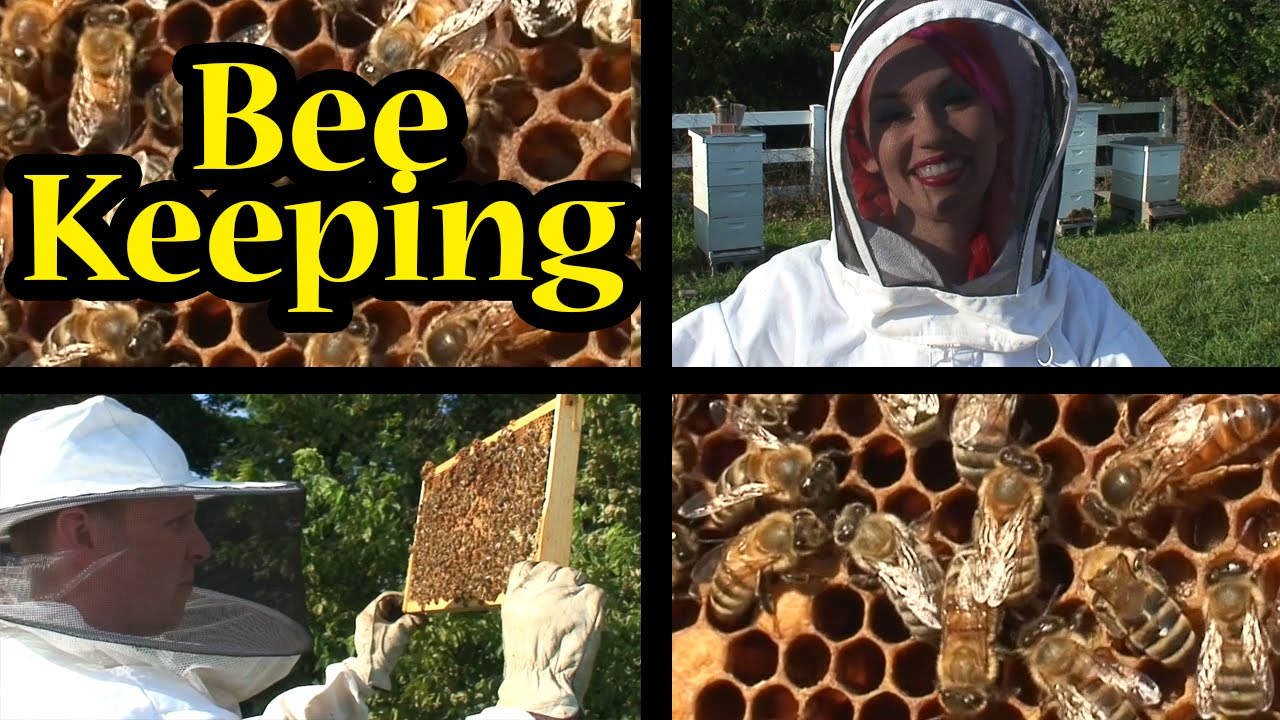 Bee Keeping Basics Pt 1 Anatomy Of A Beehive Tttv Youtube