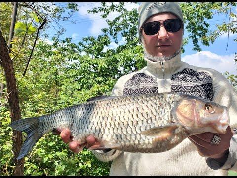 Вопрос: Вчера выловил в днепре, что это за рыба?