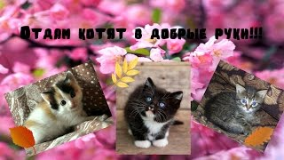 Нужна помощь!!!Отдам на первой недели сентября котят в добрые руки!!!